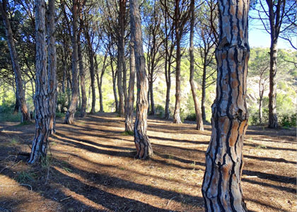 Лес около пляжа Кала-Пола
