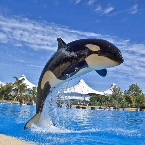 """""""Лоро-парк"""" (Тенерифе). <p> Там можно посмотреть шоу с касатками и дельфинами, увидеть пингвинов, попугаев и еще много всего интересного."""