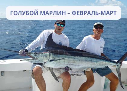 Лучшее время для рыбалки голубого марлина