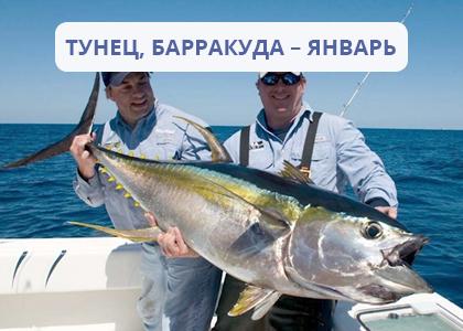 Лучшее время для рыбалки тунца и барракуды