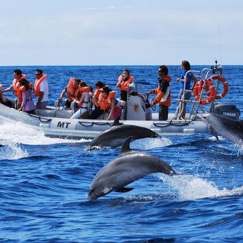 Наблюдения за китами и дельфинами в открытом океане