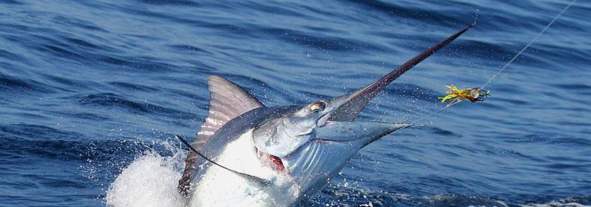Особенности рыбалки на Тенерифе