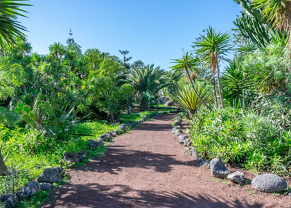 Сад около пляжа Плайя-Хардин