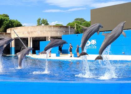 Шоу дельфинов в зоопарке на территории Casa de Campo