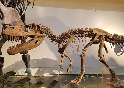 Скелет динозавра в Национальном музее естественных наук в Мадриде