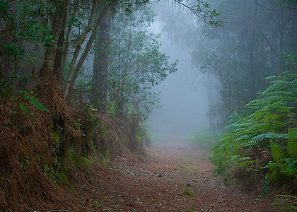 Туман в лесу Эсперанса