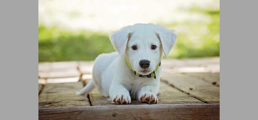 Экспресс-тест на Covid для домашних животных