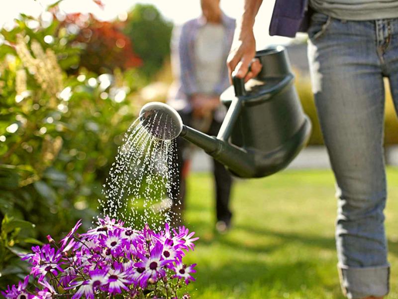Полив и стрижку растений