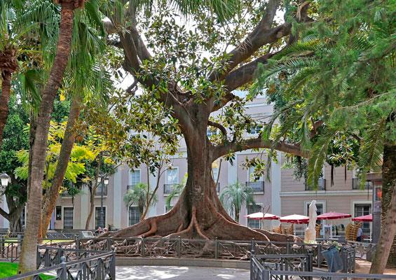 Дерево в парке Аламеда Аподака