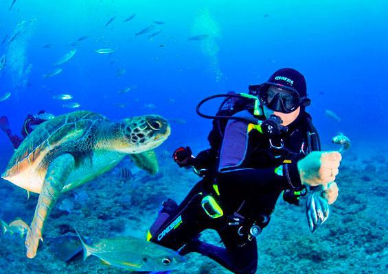 Подводный мир Тенерифе