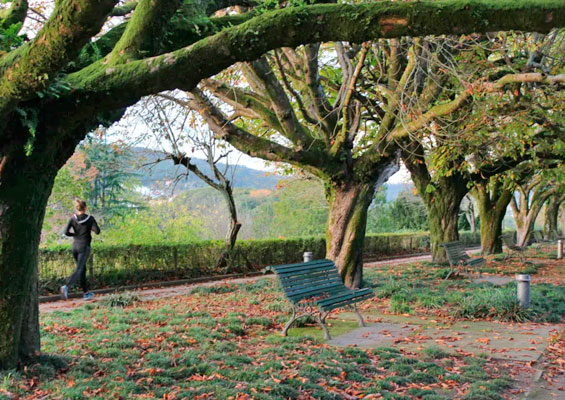 В парке Аламеда Аподака