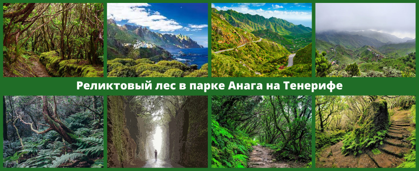 Анага Тенерифе