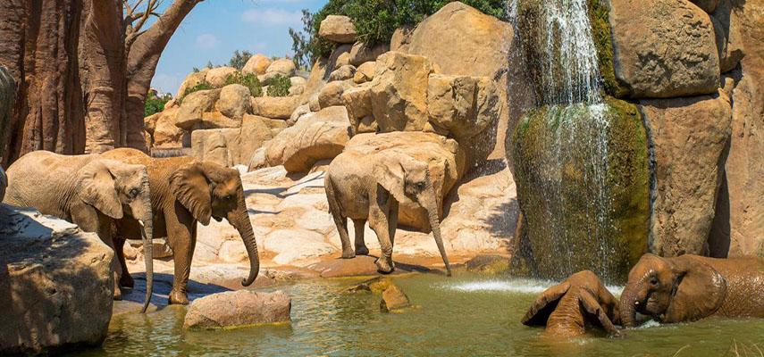Биопарк Валенсии знакомит посетителей с африканским континентом