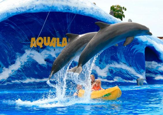 Дельфины в Aqualand