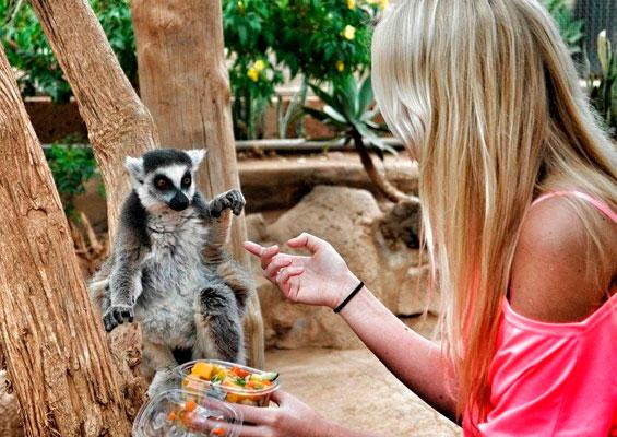 Кормление обезьянки в monkey park