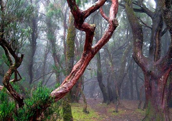 Маршрут через Волшебный лес