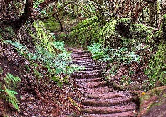 Маршрут по Волшебному лесу