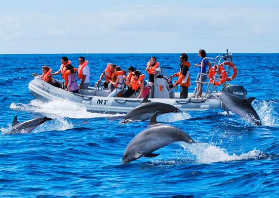 Морские экскурсии в Санта-Крус-де-Тенерифе