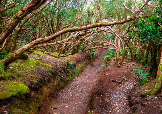 На маршруте Волшебный лес