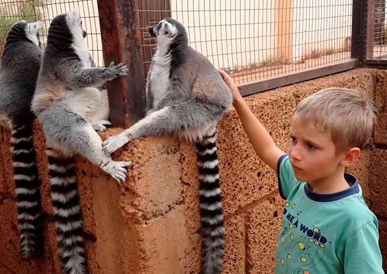 Обезьянки в monkey park