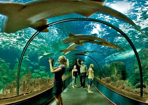 Океанариум в Лоро-парке