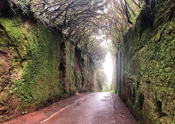 Старая дорога к Pico del Inglés