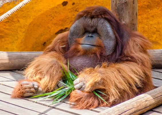 В парке обезьян monkey park