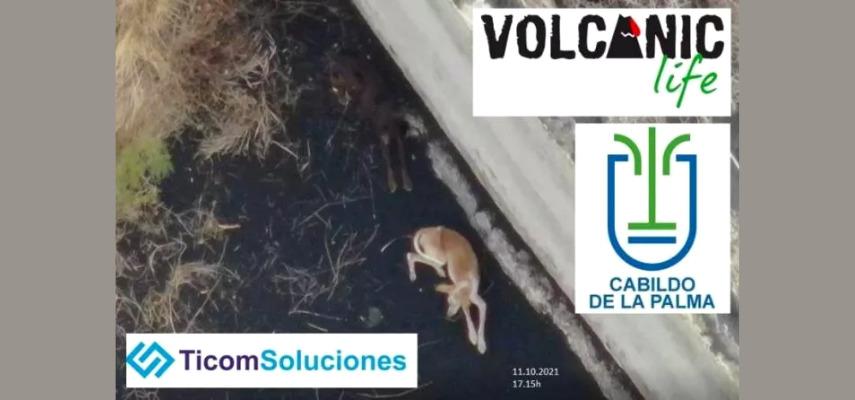 Животные в ловушке на острове Ла Пальма